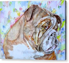 Acrylic Print featuring the painting Bulldog - Watercolor Portrait.7 by Fabrizio Cassetta