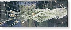 Bullet Fragmentation Abstract Acrylic Print by Kristin Elmquist