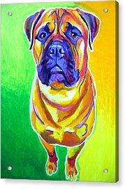 Bullmastiff - Maverick Acrylic Print by Alicia VanNoy Call