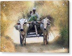 Bullock Cart Acrylic Print by Shreeharsha Kulkarni
