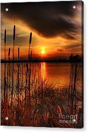Bullrush Sunset Acrylic Print by Kim Shatwell-Irishphotographer