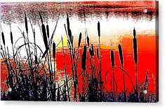 Bullrushes Against The Sunset Acrylic Print