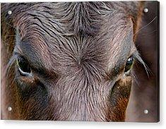 Bull's Eye Acrylic Print