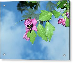 Bumble Bee 2 Acrylic Print by Evelyn Patrick
