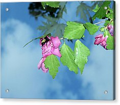 Bumble Bee Acrylic Print by Evelyn Patrick