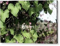 Acrylic Print featuring the photograph Bumble Bum by Megan Dirsa-DuBois
