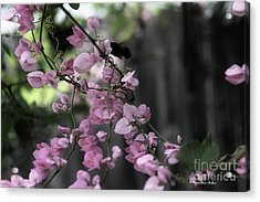Acrylic Print featuring the photograph Bumble by Megan Dirsa-DuBois