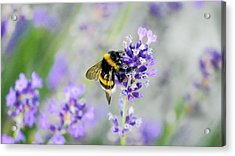 Acrylic Print featuring the photograph Bumblebee by Bee-Bee Deigner
