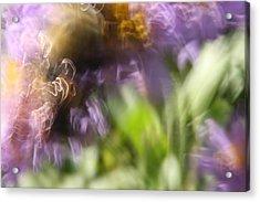 Bumblebee Dance Acrylic Print