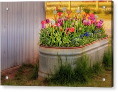 Acrylic Print featuring the photograph Bunch Of Tulips by Susan Candelario