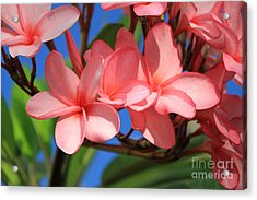 Acrylic Print featuring the photograph Bunches Of Pink Plumerias by Edward R Wisell