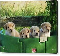 Bundles Of Joy - Labrador Art Acrylic Print