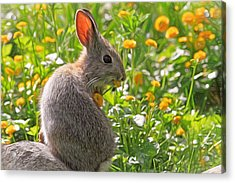 Bunny Brunch Acrylic Print by Donna Kennedy