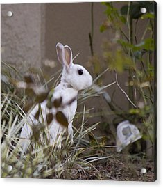 Bunny In The Garden Acrylic Print by Anthony Towers