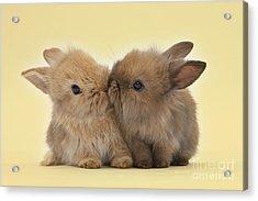 Bunny Kisses Acrylic Print