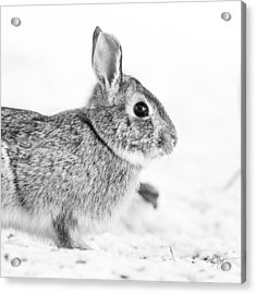 Bunny Pillow Acrylic Print