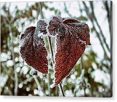 Burgundy Frost Acrylic Print