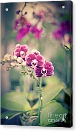 Acrylic Print featuring the photograph Burgundy Orchids by Ana V Ramirez
