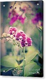 Burgundy Orchids Acrylic Print by Ana V Ramirez