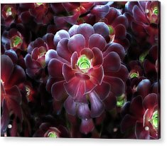 Burgundy Succulenta Acrylic Print