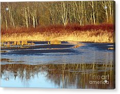 Burnaby Lake Acrylic Print