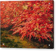 Burning Bush Acrylic Print