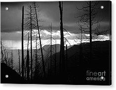Burnt Forest - Yosemite Acrylic Print