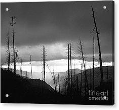 Burnt Forest II - Yosemite Acrylic Print