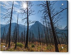 Acrylic Print featuring the photograph Burnt Offerings by Lon Dittrick