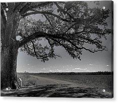 Burr Oak Tree Acrylic Print by Jane Linders