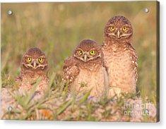 Burrowing Owl Siblings Acrylic Print