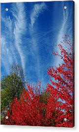 Burst Of Color Acrylic Print by Gerry Tetz
