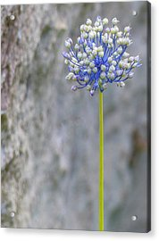 Acrylic Print featuring the photograph Bursting With Blooms by Rand