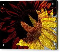 Bursting With Joy Acrylic Print by Lenore Senior