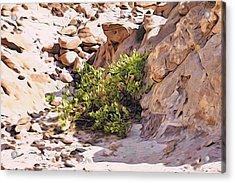 Bush In The Sinai Desert Acrylic Print