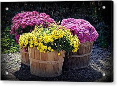 Acrylic Print featuring the photograph Bushels Of Fall Flowers by AJ Schibig