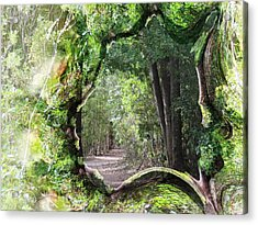 Bushwalk Acrylic Print