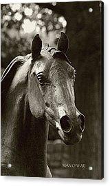 Bust Of Man O War 3 - Kentucky Horse Park Acrylic Print by Thia Stover