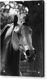 Bust Of Man O War 2 - Kentucky Horse Park Acrylic Print by Thia Stover