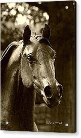 Bust Of Man O War - Kentucky Horse Park Acrylic Print by Thia Stover