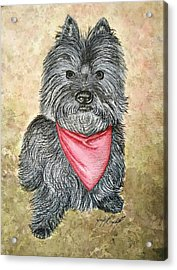 Buster Acrylic Print by Jennifer Campbell Brewer