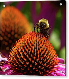 Busy As A ... Just Busy Acrylic Print