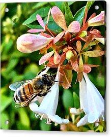 Busy As A Bee Acrylic Print