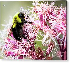 Acrylic Print featuring the photograph Busy As A Bumblebee by Ricky L Jones