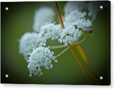 Acrylic Print featuring the photograph Busy Bee by Daniel Hebard