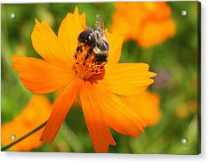 Busy Bee Acrylic Print by DazzleMe Photography