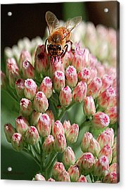 Busy Bee Acrylic Print by DigiArt Diaries by Vicky B Fuller