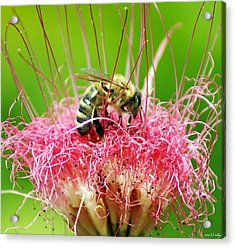 Busy Bee Acrylic Print by Holly Kempe