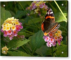 Acrylic Print featuring the photograph Busy Butterfly Side 1 by Felipe Adan Lerma