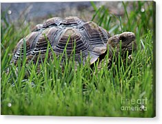 But He Has A Great Personality Acrylic Print